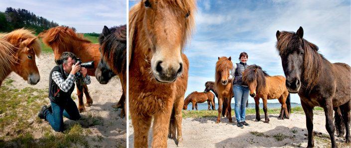 Heste og Jens Bach