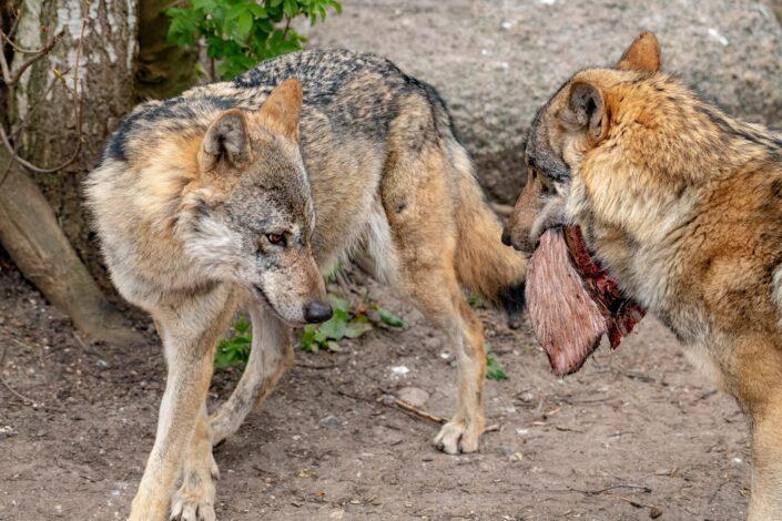 Fotograf Jens Bach ulve